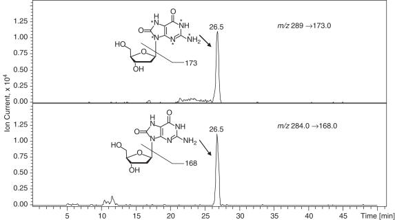 HPLC-ESI + -MS/MS analysis of 8-oxo-dG in an enzymatic hydrolysate of rat liver DNA (80 μg). An Agilent 1100 series capillary HPLC-ion trap MS system was used. A Zorbax SB C18 column (0.5 × 150 mm, 5 (m) was maintained at 10°C and eluted at a flow rate of 12 (l/min with a gradient of methanol (solvent B) in 15 mM ammonium acetate (solvent A). The mass spectrometer was operated in the positive ion MS/MS mode. Quantitative analyses were performed in selected reaction monitoring mode using the transitions m/z 284.1→168.0 (M + 2H − dR) + for 8-oxo-dG and the corresponding transition m/z 289.1→173 for [ 15 N 5 ]-8-oxo-dG.