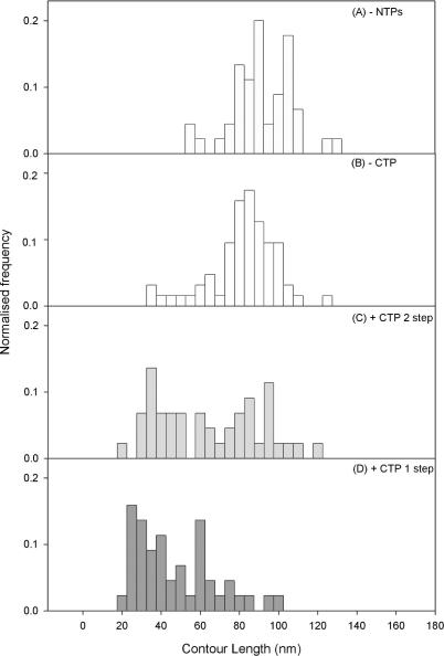 Inter RNAP–RNAP separation distributions along the DNA contour length. RNAP centre separation: ( A ) in the absence of all NTPs (n = 45), i.e. OPCs; ( B ) in the presence of ATP, GTP and UTP only (n = 131), i.e. SECs; ( C ) in the presence of ATP, GTP and CTP, followed by CTP after 20 min ( n = 44); ( D ) formed by addition of all 4 NTPs together ( n = 45) from the OPC state.