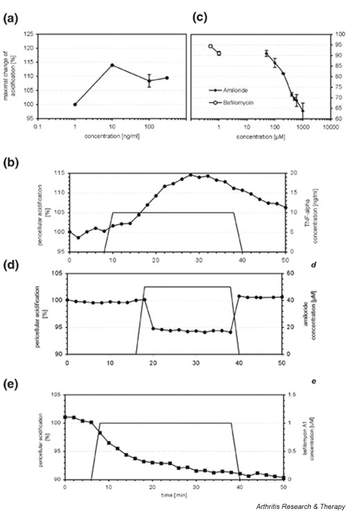 Release of acidic components by prosthesis loosening fibroblasts (PLFs). (a) and (b) Cytosensor measurement of PLFs stimulated with tumour necrosis factor (TNF)-α (1, 10 and 300 ng/ml) revealed the release of acidic components, with maximal pericellular acidification (rmax/req) of 15% at 10 ng/ml TNF-α (A). Recording of the time curve with 10 ng/ml TNF-α showed a maximal acidification 15 min after the influx of TNF-α was started (b). (c) Incubation of PLFs with the ATPase inhibitors amiloride and bafilomycin A 1 at different concentrations decreased the pericellular acidification by a maximum of 32% with amiloride and 11% with bafilomycin A 1 . (d) Inhibition of H + release by amiloride was recorded after 3 min and remained stable for the total measuring time of 45 min. Pericellular pH returned to the initial values shortly after the perfusion of amiloride was terminated. (e) The specific v-ATPase inhibitor bafilomycin A 1 at concentrations of 10 -6 mol/l showed a clear effect shortly after its addition, and the H + secretion remained low even after discontinuation of bafilomycin A 1 infusion.