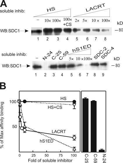 Lacritin-SDC1 binding is inhibited by soluble hS1ED, lacritin, and N-24, but not by C-25, C-59, HS, CS, SDC2, or SDC4.  (A, top) Lacritin-intein beads were incubated with human SDC1 lysates from stably expressing HEK293T cells in the presence of increasing amounts of soluble HS (70–700 μg), HS (700 μg) plus CS (700 μg), or lacritin (14–700 μg) or no inhibitor (−). The quantity of soluble inhibitor was calibrated relative to the ∼7–8 μg of human SDC1 elutable from lacritin-intein beads with 1 M NaCl. After incubation, beads were washed extensively and treated with heparitinase I/chondroitinase ABC. The digests were centrifuged, and pellets were blotted with mAb B-B4 for SDC1 core protein, as in   Fig. 2 . (bottom) Lacritin-intein beads were incubated with human SDC1 lysates in the presence of soluble N-24, C-25, C-59 (14 μg of each), increasing amounts of bacterially expressed human SDC1 ectodomain (hS1ED; 35–700 μg), or with HEK293T cell–expressed native SDC2 or -4 (70 μg of each). Beads were washed and treated as above. (B) Quantification of inhibition binding. Error bars indicate SEM.