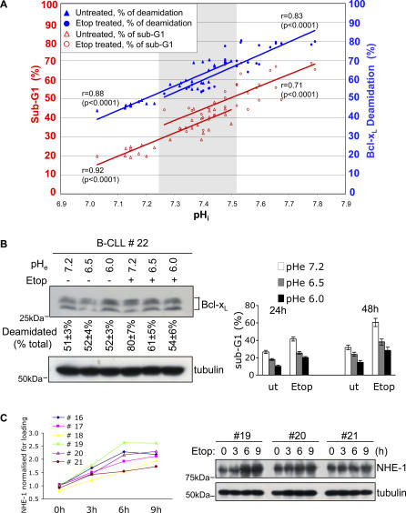 DNA Damage Induces NHE-1 Expression, and Enforced Alkalinisation Promotes Apoptosis of Human B-CLL cells (A) Enforced alkalinisation of cancer cells from patients ( n = 10) with B-CLL causes Bcl-x L deamidation and associated cell death. Treatment with etoposide (Etop) in vitro further amplifies cell death. Patients' cells (PBMC, in the range 85%–95% CD19 + B220 + ) were incubated at pH e values of 7.2, 8.0, or 8.5, and the pH i values were monitored by SNARF-1 staining using flow cytometry. Apoptosis was evaluated by measurement of sub-G1 peaks using flow cytometry. The data shows pooled results from ten patients via 30 values per treatment condition: due to identical values, some symbols overlap. The correlation coefficients ( r ) of deamidation or sub-G1 versus pH i are shown for each treatment. The p value (significance) for each correlation is shown in parentheses. The correlation coefficients of sub-G1 versus deamidation are r = 0.92 ( p