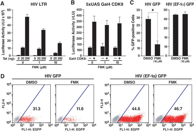 Suppression of HIV transcription by FMK, a small-molecule inhibitor of RSK2. (A) Transient transfection of Jurkat 1G5 cells, containing an integrated HIV LTR luciferase construct, with Tat/FLAG (20 and 200 ng). Transfected cells were treated with indicated amounts of FMK or DMSO for 18 h. Values are mean±SEM of four experiments. (B) Cotransfection of Jurkat T cells with 5xUAS luciferase and Gal4-CDK9 (20 ng) and subsequent treatment with FMK at indicated concentrations. Values are means±SEM of four experiments. (C) GFP expression in Jurkat T cells infected with HIV NL4-3 containing the GFP open reading frame in place of the viral nef gene or with an HIV-based lentiviral vector expressing GFP from the heterologous EF-1α promoter. After overnight infection, cells were treated with FMK or DMSO for 36 h. Values are means±SEM of three experiments. *p = 0.002 ( t test). (D) GFP expression in one representative experiment performed with HIV GFP or HIV (EF-1α) GFP virus.