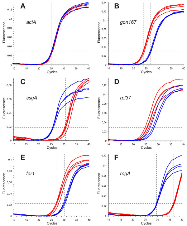 Comparison of gene expression of six target genes in gonidia versus somatic cells by quantitative real-time RT-PCR . Amplification curves for A) actA (internal control for the 2 -ΔΔCt method), B) gon167 , C) ssgA , D) rpl37 , E) fer1 , and F) regA . The target-specific fluorescence signal of SYBR Green fluorescence emission (detection range 515–545 nm) is plotted against the number of PCR cycles. Curves of gonidial RT-PCRs are given in red, somatic RT-PCRs in blue. All real-time RT-PCR experiments were carried out in triplicate, and a mean amplification curve was generated for each cell-type. The threshold level is given by a broken, horizontal line. The cycle at which the mean amplification curve of gonidial or somatic real-time RT-PCRs crosses the threshold (C t value) is indicated by a broken, vertical line.