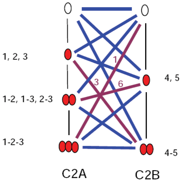 Schematic illustration of the <t>Ca2+</t> occupancy states for Syt1. The maximal number of Ca2+ ions (symbolized as red ovals) that can bind C2A is 3 (marked as 1,2,3) and 2 (marked as 4, 5) for the C2B. The blue and purple lines represent all potential states ranging from no binding to maximal occupancy by 5 ions. Total of 12 edges representing Syt1 states assuming the actual position of the ions within C2A or C2B is not important. Addition of the positional information increases the number of Ca2+ occupancy states as illustrated by the purple edges. The number of individual states associated with the purple edges summarizes to ten combinations of occupancy of 3 Ca2+ ions. With positional information for Ca2+ ions occupancy the number of individual states reaches 32 (1 state for no occupancy, 5 states for one ion, 10 states for 2 ions, 10 states for 3 ions, 5 states for 4 ions and another state for occupancy of 5 ions).