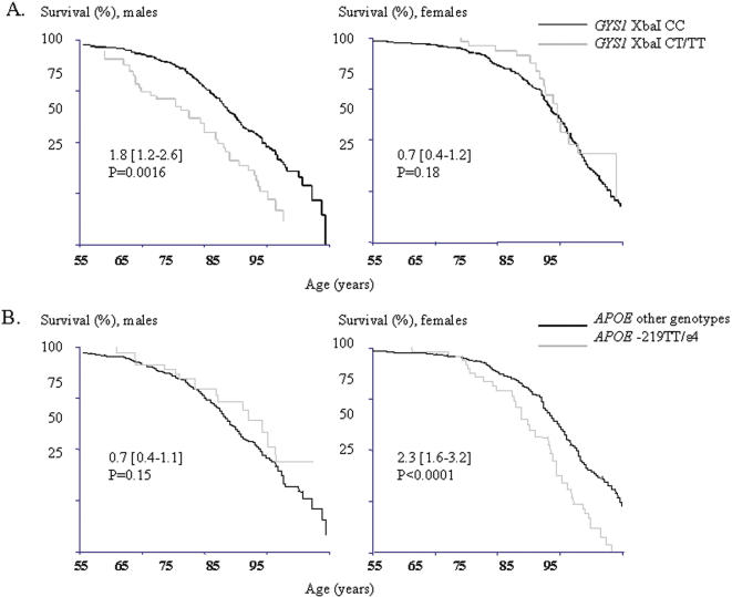 CV mortality in males and females according to the GYS1 XbaI (A) and APOE –219/ε2/ε3/ε4 (B) genotypes. Kaplan Meier survival curves illustrating a higher risk for CV mortality (HR 1.8 [1.2–2.6], p = 0.0016, p c = 0.0096) in male carriers of the GYS1 XbaI CT/TT-genotypes and in female carriers of the APOE –219TT/ε4 genotype combination (HR 2.3 [1.6–3.2], p