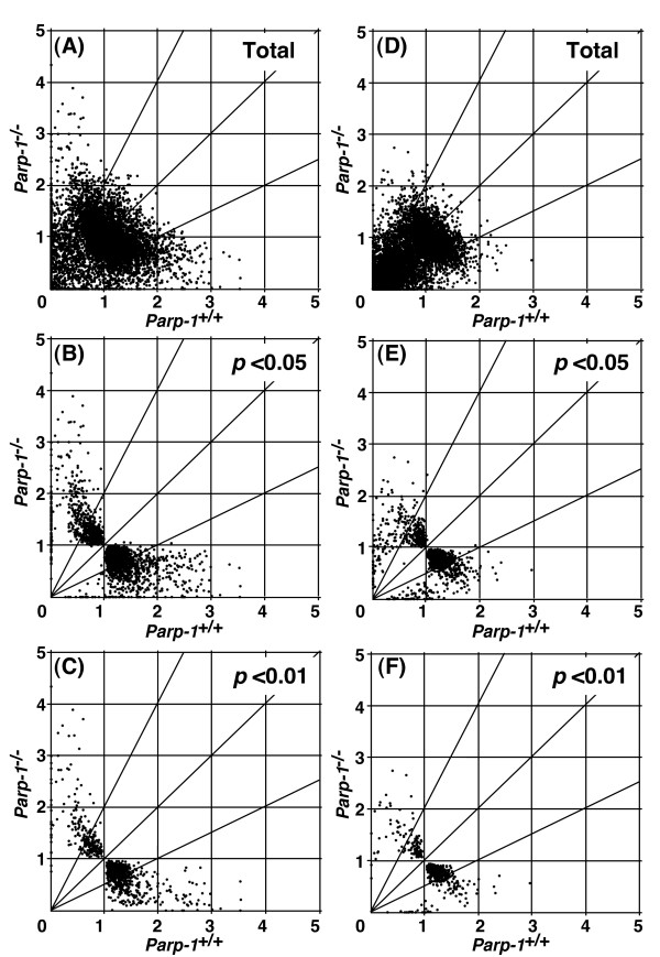 Effect of Parp-1 deficiency on gene expression . Gene expression data from microarray analyses are plotted for Parp-1 -/- versus wild-type ( Parp-1 +/+ ) ES cell lines (A-C) or the livers (D-F). Horizontal and vertical axes represent expression levels normalized for an individual gene. Each point represents normalized expression data for an individual gene. The genes that showed standard deviations greater than 2.0 in the normalized data of both genotypes (A and D) were excluded and gene lists were constructed with p