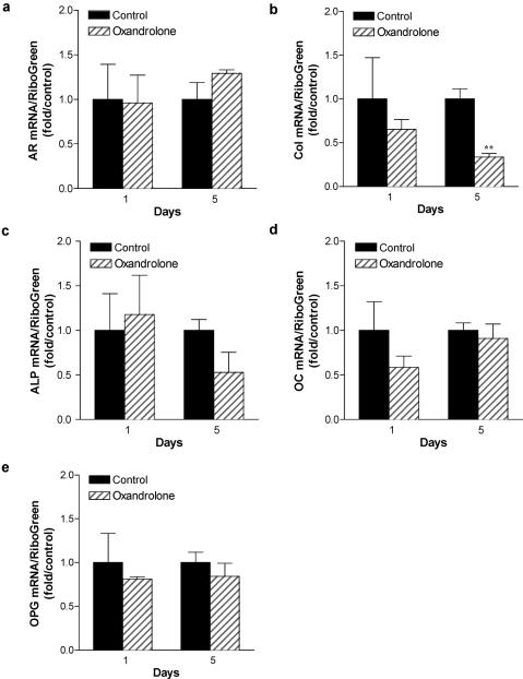 Consequence of oxandrolone treatment on gene expression in normal human osteocytes: time course analysis. Normal human osteoblastic cells were cultured for 10 days to confluence, then switched to differentiation medium containing ascorbic acid and β-glycerol phosphate. After 7 days, osteocytic cells were treated with 15 μg/mL oxandrolone. Total RNA was isolated after 24 hours or 5 days treatment, and gene expression characterized by qRT-PCR analysis using human primers specific for AR, type I collagen (col), alkaline phosphatase (ALP), and osteocalcin (OC) and osteoprotegerin (OPG). n = 3 to 4. ** P