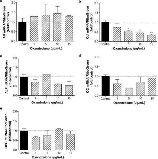 Consequence of oxandrolone treatment on gene expression in normal human osteocytes: dose-response analysis. Normal human osteoblastic cells were cultured as described in Figure 5 . Osteocytic cultures were treated for 5 days with 0, 1, 5, 10, and 15 μg/mL oxandrolone. Total RNA was isolated and gene expression characterized by qRT-PCR analysis using human primers specific for AR, type I collagen (col), alkaline phosphatase (ALP), osteocalcin (OC) and osteoprotegerin (OPG). n = 2 to 4. * P
