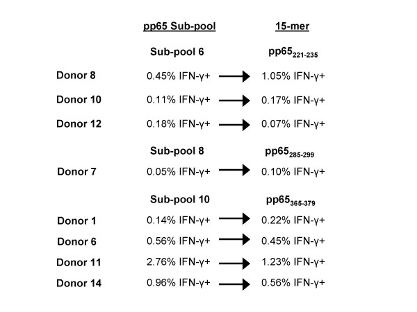 Identification of CMV pp65 15-mer epitopes from 3 peptide subpools that were reactive with CD4+ T cells . PBMCs from 8 donors were reactive with peptides in subpools 6, 8, and 10. Testing of all 15-mers in each subpool identified three15-mers that were reactive with CD4+ T cells, one from each subpool.