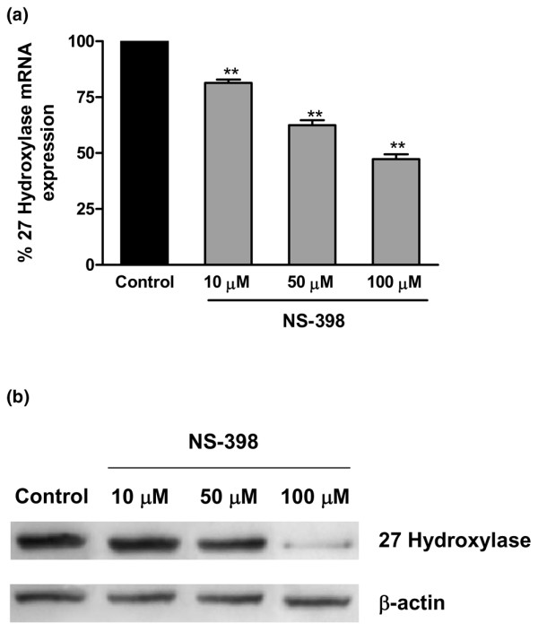 Detection and quantitation of cholesterol 27-hydroxylase in THP-1 cells exposed to NS398. (a) Dose-dependent decrease in 27-hydroxylase mRNA expression in THP-1 monocytes treated with the COX-2 inhibitor NS398. Cultured THP-1 monocytic cells were untreated or exposed to NS398 for 18 hours. After isolation of total RNA, the RNA was reverse-transcribed and the cDNA amplified by quantitative real-time polymerase chain reaction as described. Signals obtained from the amplification of GAPDH message were used as internal controls. (b) Dose-dependent decrease in 27-hydroxylase protein expression in THP-1 monocytes treated with the COX-2 inhibitor NS398. Cultured THP-1 monocytic cells were untreated or exposed to NS398 for 18 hours. Total cell protein was isolated and 27-hydroxylase detected with specific rabbit polyclonal anti-human 27-hydroxylase antibody. Western blotting was performed with an anti-β-actin antibody to confirm equal protein loading. At 100 mM NS398 concentration, cell death was statistically significant (14.8% ± 6.3%). COX, cyclooxygenase; GAPDH, glyceraldehyde-3-phosphate dehydrogenase; NS398, N -(2-cyclohexyloxy-4-nitrophenyl)methanesulfonamide. ** p