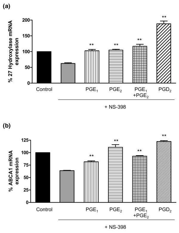 QRT-PCR for 27-hydroxylase and ABCA1 message in NS398-treated THP-1 cells exposed to prostaglandins. (a) 27-Hydroxylase message is decreased by the COX-2 inhibitor NS398 and this decrease is reversed by prostaglandins E 1 , E 2 , and D 2 . THP-1 human monocytes were exposed to the following conditions represented by the six bars (from left to right): (1) RPMI 1640, (2) NS398 (50 μM), (3) PGE 1 (0.1 μM) + NS398 (50 μM), (4) PGE 2 (0.1 μM) + NS398 (50 μM), (5) PGE 1 (0.1 μM) + PGE 2 (0.1 μM) + NS398 (50 μM), and (6) PGD 2 (14 μM) + NS398 (50 μM) (all 18-hour exposures). Cells were extracted for total RNA and were evaluated for 27-hydroxylase mRNA expression by QRT-PCR. Signals obtained from the amplification of GAPDH message were used as internal controls. (b) ABCA1 message is decreased by the COX-2 inhibitor NS398 and this decrease is reversed by prostaglandins E 1 , E 2 , and D 2 . THP-1 human monocytes were exposed to the following conditions represented by the six bars (from left to right): (1) RPMI 1640, (2) NS398 (50 μM), (3) PGE 1 (0.1 μM) + NS398 (50 μM), (4) PGE 2 (0.1 μM) + NS398 (50 μM), (5) PGE 1 (0.1 μM) + PGE 2 (0.1 μM) + NS398 (50 μM), and (6) PGD 2 (14 μM) + NS398 (50 μM) (all 18-hour exposures). Cells were extracted for total RNA and were evaluated for ABCA1 mRNA expression by QRT-PCR. Signals obtained from the amplification of GAPDH message were used as internal controls. ** p