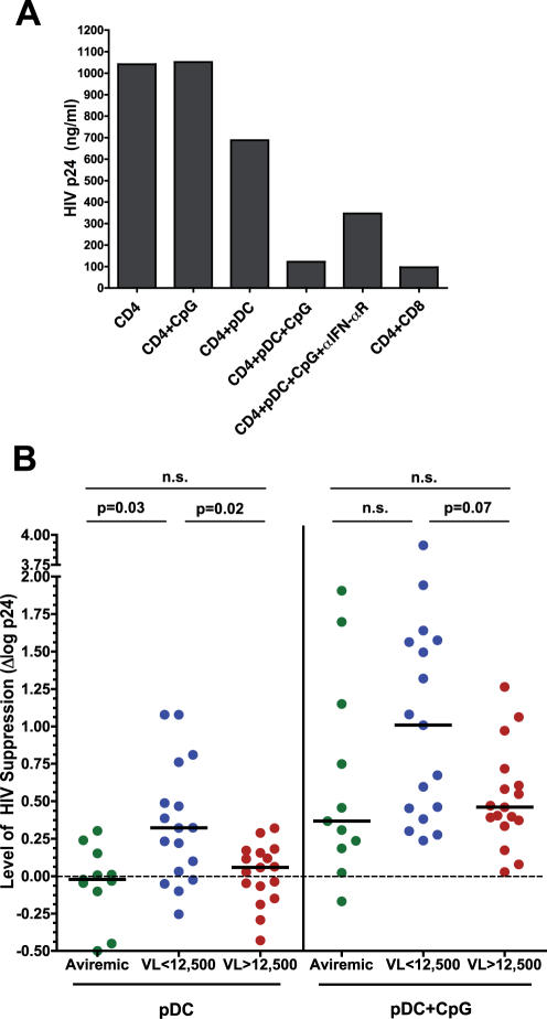 pDC-mediated suppression of <t>HIV</t> replication in autologous CD4 + T cells. pDCs were purified from HIV-infected individuals and plated overnight at 5×10 4 cells/well with or without 1 µg/ml CpG ODN 2216. For targets, autologous <t>PBMCs</t> were stimulated overnight with anti-CD3 and IL-2. On day 0, CD4 + T cells were purified and plated at 1.2×10 6 cells/well alone or with 5×10 4 stimulated or unstimulated pDCs, or with 1.2×10 5 purified autologous CD8 + T cells. Neutralizing antibody against IFN-α receptor was added at 5 µg/ml to some wells. Culture supernatants were collected at days 3, 5, and 7 and assayed for HIV p24 by ELISA. All data shown are from day 7. A) A representative example of data from a viremic patient. CpG ODN 2216 had no effect on CD4 + T cells alone, and the degree of viral suppression by activated pDCs was comparable to that by CD8 + T cells. B) Effect of pDCs on HIV replication in autologous CD4 + T cells. The degree of HIV suppression by pDCs was expressed as the difference of log HIV p24 production between the culture containing CD4 + T cells alone and the co-culture of CD4 + T cells and pDCs (Δlog p24 = log HIV p24[CD4 cells alone]-log HIV p24[CD4+pDC]). Data are shown for unstimulated pDCs (left panel) and CpG-stimulated pDCs (right panel). Horizontal lines represent median values. n.s., not significant.