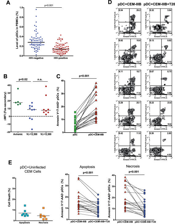 pDC killing in HIV-infected individuals. A) Plasmacytoid dendritic cell numbers are reduced in HIV-infected versus uninfected individuals. PBMCs were stained with anti-BDCA-2 (FITC) and anti-CD123 (PE) to measure the levels of pDCs. Horizontal lines represent median values. B) pDCs are susceptible to Fas-mediated apoptosis. Fas was crosslinked on the surface of PBMCs, and resultant pDC apoptosis was measured by Annexin V staining. n.s., not significant. C–E) pDC cell death induced by HIV-infected cells. 2×10 6 CEM cells chronically infected with HIV (CEM-IIIB) were incubated for 8 h with 10 7 PBMCs from HIV-infected donors. The levels of apoptosis and necrosis were assessed by Annexin V and 7-AAD staining. Cells within the pDC (BDCA-2 + /CD123 + ) population that were double-positive for both Annexin V and 7-AAD were considered necrotic, while those positive for Annexin V and negative for 7-AAD were considered apoptotic. In some cultures, 100 µg/ml T20 was added. C) Cells expressing HIV induce pDC death. The percent of pDCs that were necrotic (Annexin V + /7-AAD + ) is indicated on the y-axis. PBMCs alone versus PBMCs+CEM-IIIB are shown. As indicated, CEM-IIIB cells showed a significant induction of cell death vs. cells alone. D) Representative examples of T20-mediated blockade of CEM-IIIB-induced pDC cell death. E) Cell death is blocked by T20. Cells were incubated with CEM cells alone (left panel), CEM-IIIB, or CEM-IIIB+T20, and the percentage of pDCs in the apoptotic or necrotic quadrants was quantified. No cell death above baseline was induced by CEM cells alone. Both types of cell death induced by CEM-IIB cells were significantly reduced (p values indicated) in the presence of T20.