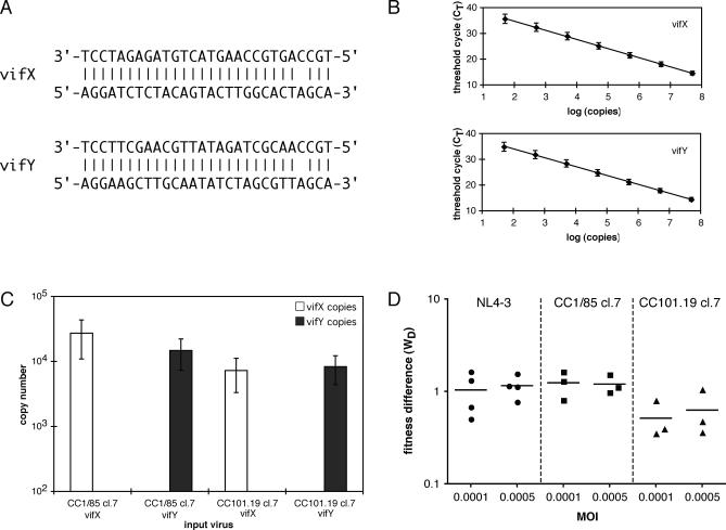 The Use of the TaqMan <t>QPCR</t> Assay to Determine Replicative Fitness (A) The sequences (3′ to 5′) of the vifX and vifY TaqMan probes are shown on top, the sequences of the vifX and vifY <t>vif</t> alleles are shown below. Each probe differs from its target sequence by one nucleotide because the vifX probe was designed to match the consensus for HIV-1 subtype B vif in this region. Each probe binds to the sense strand of proviral DNA. The probes are aligned to the target sequences with bars indicating positions of identity. The two probes and the two vif alleles differ at 11 nucleotides each. The vifY vif allele that was engineered to tag the reference viruses contains only synonymous changes. (B) The plot demonstrates the working range and reproducibility of the QPCR assay. The average threshold cycle ( C T ) values obtained in six representative multiplexed assays are shown ± standard deviation (SD). In each assay, seven serial dilutions of the standard plasmid ranging from 5 × 10 7 to 5 × 10 1 DNA templates were measured using TaqMan probes specific either for the vifX (Cy5 fluorescence, top panel), or the vifY sequence (FAM fluorescence, bottom panel). The correlation coefficients ( R 2 ) of the two standard curves were > 0.995 and the PCR efficiencies were > 90%. (C) The specificity of the QPCR assay is depicted. Four independent PBMC cultures were singly infected with one of the CC1/85 cl.7 or the CC101.19 cl.7 viruses containing either the vifX or the vifY vif sequence. Genomic DNA from each culture was PCR amplified and then used in the multiplexed TaqMan QPCR assay, as described in Materials and Methods . The average number of copies of each vif allele detected per QPCR reaction for each of the four mono-infections from six representative experiments is shown ± SEM. The lower limit for copy number is set to 100 for plotting purposes, although 50 copies can be quantified reproducibly, and the allele that was not present in the infection was never detected 