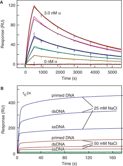 SPR measurements of the α − τ C 16 and DNA–τ C 24 interactions. ( A ) Solutions of decreasing concentrations of α (3.0, 2.0, 1.0, 0.6, 0.3nM and blank; from top to bottom) were tested for interaction with immobilized bio-τ C 16. Curves, shown in colours, were fitted globally to a 1:1 Langmuir model with mass transfer using BIAevaluation 3.1 software. Sensorgrams were simulated (black curves) using the same model and the fitted parameters  k a  = (1.52 ± 0.01) × 10 6 M −1 s −1 ,  k d  = (4.02 ± 0.01) × 10 −4 s −1 ,  k t  (mass transfer coefficient) = 2.98× 10 8 RUM −1 s −1 , yielding  K D (α–bio-τ C 16) = 265 ± 2pM. Measurements were carried out in SPR buffer at 20°C. ( B ) Salt dependence of binding of τ C 24 (1μM) to ss, ds and primer-template DNA, studied by SPR at 20°C, as described in the Materials and methods section. Binding was monitored in 10mMNa.HEPES buffer, pH 7.4, 0.005% P20, containing 75mMNaCl (green sensorgrams), 50mMNaCl (red) or 25mMNaCl (blue). Under all conditions studied, the dissociation phase was complete within seconds, indicating that the interaction is rapidly reversible (not shown). Similar responses were seen with τ C 22, while no binding was detected in any condition with τ C 16.