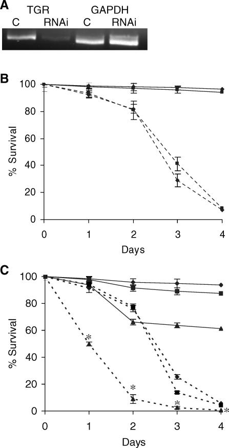 Survival of Schistosomula after RNAi Silencing of TGR Expression (A) Qualitative measure of TGR transcripts by reverse transcription PCR. The abundance of TGR mRNA was greatly reduced by dsRNA treatment while the control gene GAPDH was unaffected. (B) Parasites were cultured in the presence of double-stranded TGR RNA (dashed lines) or of double-stranded irrelevant RNA (solid lines) in 20% O 2 (♦) or 0% O 2 (). A 500-nucleotide fragment (bp 1364–1866) of S. mansoni TGR cloned into PCRII-TOPO vector was used to transcribe TGR dsRNA. Irrelevant, nonschistosome dsRNA used for negative controls was synthesized from the PCRII-TOPO vector using T7 and SP6 RNA polymerases. (C) Combination of RNAi and drug treatments. Solid lines are irrelevant dsRNA treatments and dashed lines are dsTGR treatments; no additions (♦), 2 μM praziquantel () and 2 μM AF (▴). At each time point, data comparing the combination treatment (2 μM AF + TGR dsRNA) to either 2 μM AF or TGR dsRNA alone were statistically significant (* p