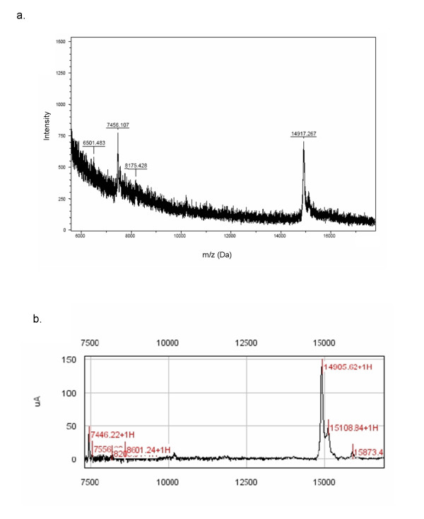 Comparative m/z determination of the 14.9 kDa differentially expressed protein/peptide peak . Lysates from several clones were pooled and enriched under the same reversed-phase conditions that were used in the H50 ProteinChip SELDI analysis. Reversed-phase high-performance liquid chromatography (HPLC) was performed in order to compare mass obtained from SELDI analysis to more accurate MALDI-TOF MS. HPLC-purified samples were run in parallel on SELDI-TOF (on a normal-phase ProteinChip) and MALDI-TOF mass spectrometers. One peak of 14.9 kDa identified as differentially expressed in T-cell senescence is demonstrated by MALDI-TOF (a) and SELDI-TOF (b) mass spectrometric analysis.