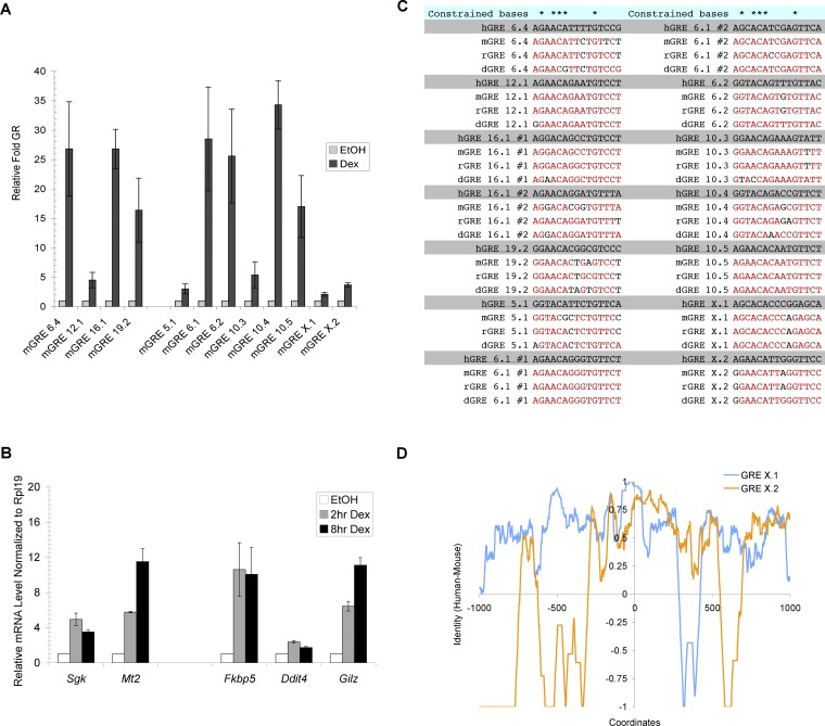 Sequence of GREs as Determinants of Gene-Specific Transcriptional Regulation by GR (A) Binding of GR at mouse orthologs of primary GR target genes from human A549 cells is shown. ChIP experiments were performed to monitor GR binding in EtOH and dex-treated C3H10T1/2 cells at genes shown. Immunoprecipitated DNA samples were analyzed with qPCR and normalized to a region near the mouse Hsp70 gene. The nomenclature mGRE represents GRE sequences detected in the mouse genome. (B) Genes adjacent to GREs are regulated by GR in C3H10T1/2 cells. Reverse transcribed RNA samples (cDNA) from C3H10T1/2 cells treated with EtOH or 100 nM dex were subjected to qPCR and normalized to mouse Rpl19 transcripts. (C) Core GR binding sequences are highly conserved. GR binding sequences from human (h), mouse (m), rat (r), and dog (d) are shown. Red sequences represent bases that are identical to that of human. Note that GREs 6.1 and 16.1 each contain two GR binding sites. ( D) Comparative sequence conservation across individual GREs. Sequence identities between human and mouse of GRE X.1 and X.2 were obtained using the same calculation as Figure 3 C. The coordinates represent bp positions with 0 defined as the center of core GR binding sites.