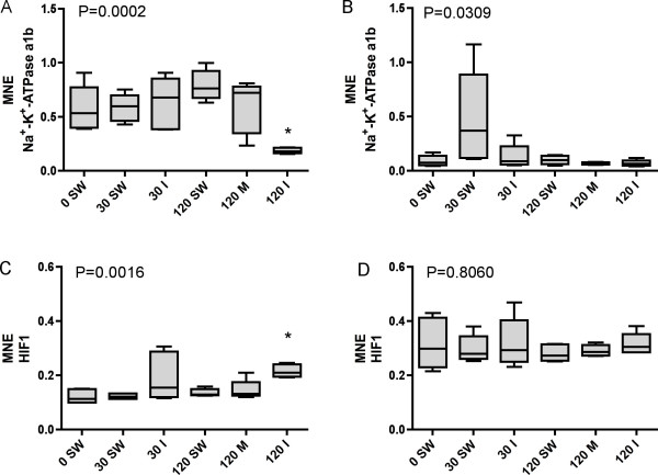 Transcriptional levels (mean normalized expression MNE) of Na + - K + - ATPase α1b in A) gill and B) brain and of Hypoxia Inducible Factor 1 ( HIF1 ) in C) gill and D) brain tissues of Atlantic salmon differentially treated during sampling. n = 6 in all groups except n = 5 for HIF1 120 min. metacaine, HIF1 120 min. isoeugenol and Na + - K + - ATPase α1b 120 min. groups. For the HIF1 120 min. isoeugenol group, n = 4. Group identity: 0 min. seawater control (0 SW), 30 min. seawater (30 SW), 30 min. isoeugenol (30 I), 120 min. seawater (120 SW), 120 min. metacaine (120 M) and 120 min. isoeugenol (120 I). An * denotes significant differences (P