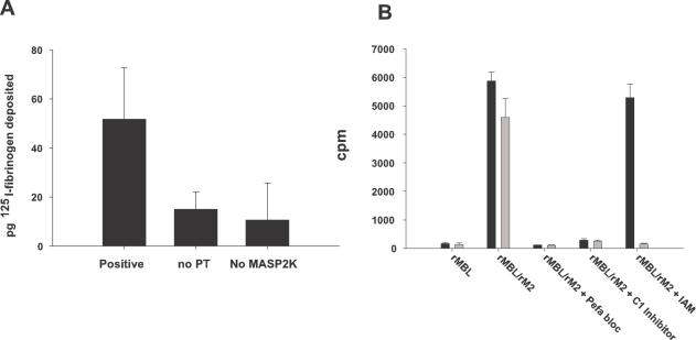 Fibrin deposition on MBL target surface. Fig 5A shows 125 I-fibrin deposition on a mannan/fibrinogen coated surface to which rMBL/rMASP2K complexes are bound. The background (a control in which rMBL/rMASP2K complexes were prevented from binding to the surface due to the presence of EDTA) has been subtracted from the remaining samples. The figure shows that deposition above background level only occurs if rMASP2K is present and if the incubation with fibrinogen is in the presence of prothrombin. Incubation was for 4h at 37°C. Fig 5B 125 I-fibrin deposition on S. aureus -derivatized beads. S. aureus -derivatized beads were incubated at 4°C with rMBL/rMASP2 complexes and subsequently with prothrombin and 125 I-fibrinogen for 7 h at 37°C. The figure shows that fibrin gets deposited on the beads upon activation of prothrombin by rMBL/rMASP2 complexes (columns 2 and 5, closed bars). The fibrin bound to the surface also gets covalently cross-linked to the bacteria since it was not removed by washing the beads with urea (column 2, open bar). If the deposition was done in the presence of iodoacetamide (IAM), which inhibits factor XIIIa, the radioactivity associated with the beads was reduced to background level upon urea extraction (column 5, open bar). In the controls in which no rMASP2 was added or in the presence of protease inhibitors (C1 inhibitor or Pefabloc SC) no deposition on the beads could be observed. Each sample was tested twice and the error bars represent one standard deviation from the mean.