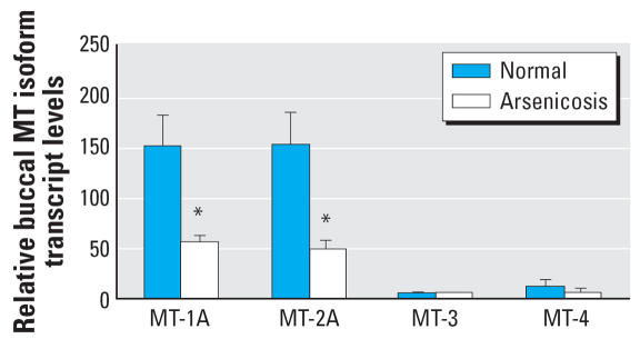 The expression of human MT isoforms in buccal cells of arsenic-exposed patients ( n = 44) and healthy subjects ( n = 12) in Guizhou, China. Total RNA was extracted, purified, reverse-transcripted, and subjected to SYBR Green real-time quantitative RT-PCR with MT isoform primers. Data are mean ± SE. *Significantly different from controls at p