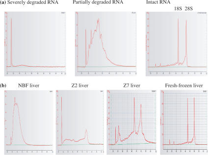 Assessment of mouse liver RNA quality using the Agilent 2100 Bioanalyser. ( a ) Typical graphs showing severely degraded, partially degraded and intact RNA. ( b ) Graphs showing RNA quality from tissues fixed in: NBF, Z2, Z7 and also fresh-frozen mouse liver.