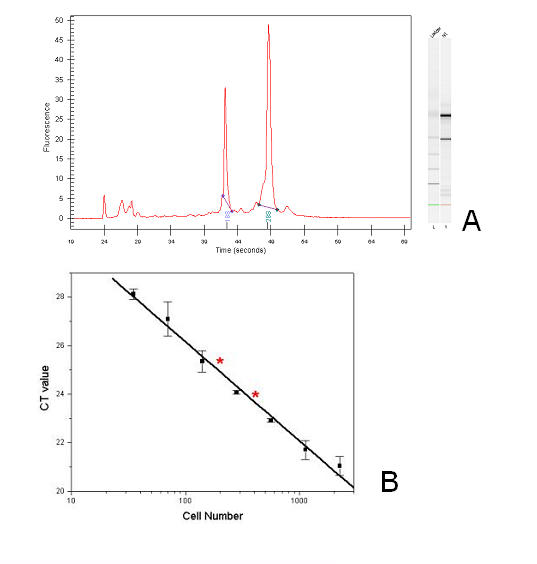 The RNA from 200 and 400 cells is of equal amount and quality of RNA purified by conventional methods. Figure 5A : Total RNA isolated from microneedle collected cells was checked using Agilent Bioanalyzer and RNA 6000 Pico kit. The size distribution and rRNA ratio (28S/18S = 2.7) indicates good intactness of RNA sample. Figure 5B : A standard curve was generated for the CT value of a known quantity of RNA from a specific cell number using the β-actin primers for real-time PCR. The RNA from 200 and 400 cells were amplified by the SMART PCR method and run identically by real-time PCR. The CT values for the amplified RNA fall on the curve showing that the appropriate amount of the house keeping gene is present in the amplified sample. The CT values for the amplified samples are designated by the red asterisks.