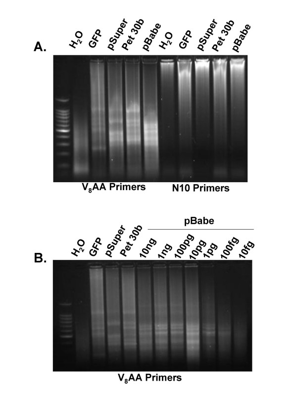 Random Multiplex PCR With 5'-VVVVVVVVAA-3' Primers Amplifies Circular Plasmid DNA . A . The indicated plasmids were amplified using random multiplex PCR with either 5'-VVVVVVVVAA-3' or 5'-NNNNNNNNNN-3' primers as indicated in the Methods section. B . The pBabe plasmid was diluted to the indicated amounts and amplified using random multiplex PCR with 5'-VVVVVVVVAA-3' primers.