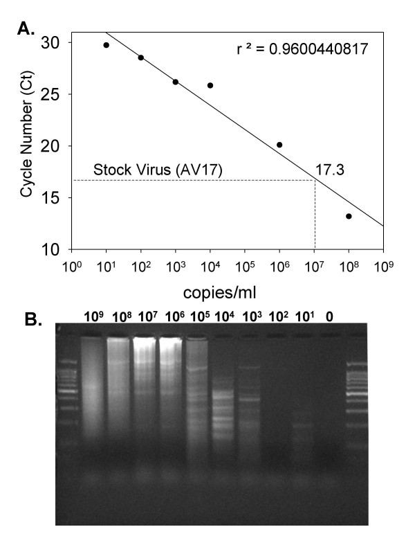 Real-Time PCR Quantitation of Adenovirus Type 17 DNA Template . A . PCR-amplified genomic DNA from Adenovirus Type 17 was quantitated by spectrophotometry (OD 260 nm) and the genome equivalents/ml calculated based on Avogadro's number (6.02205 × 10 23 /mol). Real-time PCR was conducted with Adenovirus Type 17 specific primers using 10 9 to 10 1 genome equivalents/ml as template and then using 1 μl of the stock solution of Adenovirus Type 17 as template. A standard curve was produced based on the threshold cycle number of the tested concentrations of Adenovirus Type 17 DNA template and plotted compared to the threshold cycle number (C T ) of the stock solution of Adenovirus Type 17. B . The indicated genome equivalents of Adenovirus Type 17 were added to 1 ml of human plasma, treated with 220 nm filtration and DNAse/RNAse digestion. Total nucleic acids then were purified, amplified by random multiplex PCR (50 cycles) and sequenced as described in the Methods section.