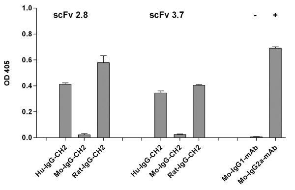 Complement fixation assay with the miniantibodies constructs MB-HuG-2.8 and 3.7, MB-MoG-2.8 and 3.7, MB-RaG-2.8 and 3.7. The binding of C1q to the miniantibodies is revealed with biotinylated anti-C1q and streptavidin conjugated with alkaline phosphatase. Positive and negative control are represented by the murine anti-His D8 (IgG2a) and CUB7402 (IgG1) mAb, both recognizing the coated tTG.