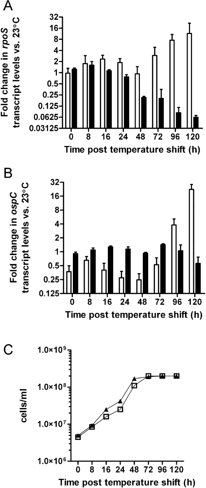 Quantitative RT-PCR analysis of rpoS and ospC transcripts following an increase in growth temperature from 23°C to 34°C. RNA was extracted from B. burgdorferi strains B31-A3 (low-passage, white bars) and B31-A (high-passage, black bars) grown at 23°C, and at various time points following a temperature shift to 34°C. Levels of transcripts were measured with specific primer/probe sets using Taqman, and values have been normalized to the internal control, flaB. Data presented represents averages of three assays performed in quadruplicate. Fold changes are expressed relative to spirochetes grown at 23°C. Error bars represent standard deviation. A. QRT-PCR analysis of rpoS following a temperature shift. B. QRT-PCR analysis of ospC following a temperature shift. C. Growth curves of B31-A3 (white squares) and B31-A (black triangles) following a temperature shift from 23 to 34°C.