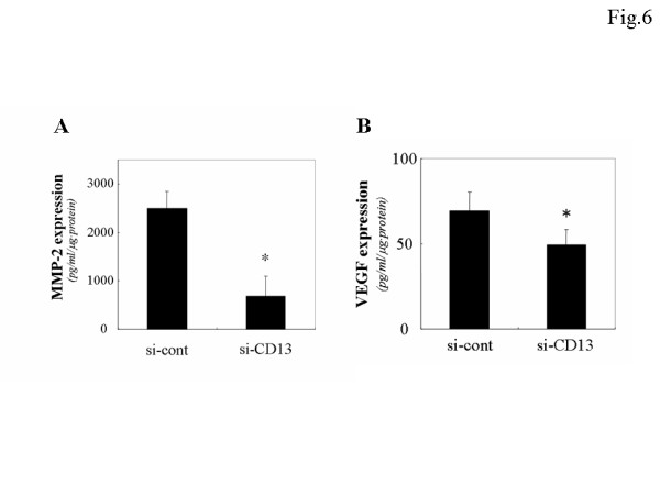 Decrease of MMP-2 and VEGF expression caused by RNA interference of APN/CD13 in ES-2 cells using MMP-2 and VEGF ELISA kit. The MMP-2 and VEGD expression in the conditioned medium of si-CD13-transfected ES-2 cells was significantly lower than that of si-cont-transfected cells. Data are expressed as the mean ± SD, A; * p