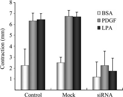 Inhibition of collagen matrix contraction in PAK1-silenced cells. Nontransfected (Control), PAK1-silenced, and mock-transfected cells were harvested and used to prepare floating collagen matrices. Samples were incubated for 4 h in DME with 5 mg/ml BSA and 50 ng/ml PDGF or 10 μM LPA added as shown. At the end of the incubations samples were fixed and the extent of matrix contraction was measured as the decrease in matrix diameter. Data shown are arithmetic mean ± SD for three separate experiments.
