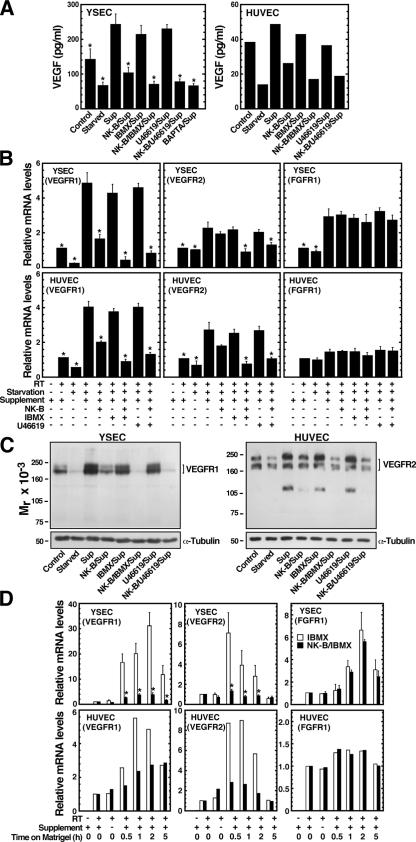 NK-B down-regulates VEGFRs. (A) YSECs and HUVECs on tissue culture plates were cultured in medium lacking supplement for 14 h and treated with indicated reagents in supplement-containing medium for 24 h, and <t>VEGF</t> secreted in the culture medium was quantitated by <t>ELISA</t> (two [right] to three [left] independent experiments). Sup, supplemented M200 medium. (A and B) Statistical significance was determined relative to the supplement condition (*, P