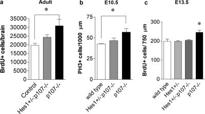 p107 regulates the neural precursor population through the repression of Hes1. (a) Adult mice received intraperitoneal injections of <t>BrdU</t> to label proliferating cells over a 10-h period. BrdU-positive cells were counted in every 10th section through the forebrains of wild-type ( n = 3), Hes1 +/− :p107 −/− ( n = 4), and p107 −/− ( n = 5) mice. (b) Proliferating progenitors in E10.5 brains were identified by <t>PH3</t> immunohistochemistry. PH3-positive cells were counted in three representative sections of wild-type ( n = 3), Hes1 +/− :p107 −/− ( n = 3), and p107 −/− ( n = 3) brains. (c) A 2-h BrdU pulse labeled proliferating progenitors in E13.5 brains. BrdU-positive cells were counted in four representative regions of the brain in wild-type ( n = 4), Hes1 +/− :p107 −/− ( n = 4), Hes1 +/− ( n = 4), and p107 −/− ( n = 3) embryos. Note that loss of a single Hes1 allele restored the numbers of progenitor cells to wild-type levels in p107 −/− mice at embryonic and adult ages. Means were statistically analyzed by one-way analysis of variance followed by Tukey's individual comparison of the means. Error bars represent SEM. *, P