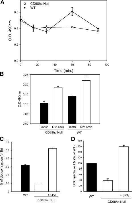 CD98hc mediates adhesion-induced <t>RhoA</t> activation and matrix contraction to enable Fn matrix assembly. (A) RhoA activity was measured in an <t>ELISA-based</t> Rho assay in WT and CD98hc-deficient cells after plating on a 3D Fn matrix. The error bars represent SEM. The assay was repeated three times with similar results. Samples were also resolved by SDS-PAGE and immunoblotted with anti-RhoA antibody (total RhoA) to confirm that both WT and CD98hc-null MEFs express similar amounts of total RhoA (not depicted). (B) Activation of RhoA by LPA in WT and CD98hc-null MEFs. Adherent serum-starved CD98hc-null cells were treated with 1 μg/ml LPA or buffer, and RhoA activity was measured after 5 min. Values represent the mean and range of duplicate determinations. The assay was repeated twice with similar results. (C) Activation of RhoA bypasses the defect in matrix contraction in CD98hc-null cells. Clot contraction was measured 1 h after WT, CD98hc-null, and CD98hc-null MEFs were stimulated with LPA (see Materials and methods for details). Values represent the mean ± SEM of triplicate determinations. Depicted is one of two such experiments with identical results. (D) Activation of RhoA bypasses the defect in Fn matrix assembly in CD98hc-null cells. DOC-insoluble Fn produced by WT, CD98hc-null, and CD98hc-null MEFs treated with LPA was evaluated biochemically as described in Fig. 3 . CD98hc-null MEFs stimulated with LPA were able to assemble Fn into fibrils as efficiently as WT cells. Depicted are the means of triplicate measurements. The assay was repeated two times with similar results.