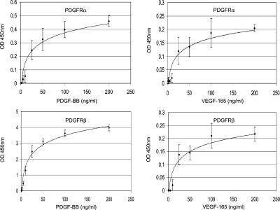 VEGF-A induced a dose-dependent increase in PDGFR tyrosine phosphorylation. The effects of varying VEGF-A 165 concentration on induced PDGFR tyrosine phosphorylation levels was determined by specific ELISAs. MSCs in serum-free conditions were exposed to 0.5, 1, 2, 5, 10, 25, 50, 100, or 200 ng/ml VEGF-A 165 for 10 min at 37°C. As a control, cells were also exposed to identical concentrations of PDGF-BB. MSC lysates were assayed for either PDGFRα or PDGFRβ tyrosine phosphorylation using a corresponding ELISA. Increased tyrosine phosphorylation is represented by an increase in optical density (OD 450nm ). Data shown are mean OD 450nm ± the SD determined from two independent experiments performed in triplicate.
