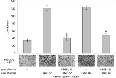 PDGF-induced MSC migration was inhibited by VEGF-A. The effects of VEGF-A on PDGF-induced MSC migration was examined using Boyden chamber migration assays. MSCs were preincubated with 10 ng/ml VEGF-A 165 for 10 min, before adding the cell suspension onto the upper chamber membrane surface and exposure to 10 ng/ml PDGF-AA or -BB in the lower half of a Boyden chamber for 5 h. MSCs not exposed to either growth factor represents a growth factor–independent migration control. Images below each bar graph are representative of migratory cells/field (using a 10× objective lens) on the membrane underside. Data shown are the mean number migratory cells ± the SD determined from 10 random fields from each of two independent experiments. *, P