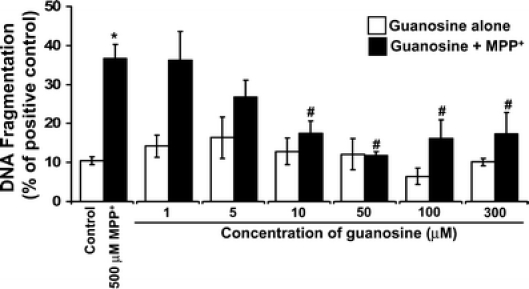 "Pre-treatment of SH-SY5Y cells with guanosine decreases MPP + -induced DNA fragmentation. SH-SY5Y cells were exposed to MPP + (500 μM) for 48 h to induce DNA fragmentation. Some cells were pre-treated with guanosine (1–300 μM) for 1 h prior to MPP + . Guanosine and MPP + remained in the cultures for the duration of the experiment. DNA fragmentation was determined after 48 h by oligonucleosomal ELISA as described in the "" Materials and methods "" section and is expressed as the percentage of the positive control ( n > 3). MPP + increased DNA fragmentation significantly at 48 h compared to that of untreated controls (* p"