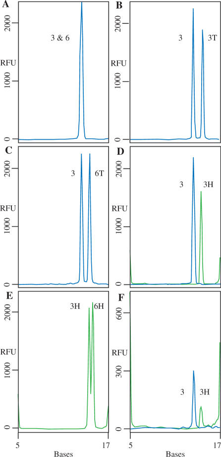 Multiplex assays. Standard NESA reactions were set up using either oligonucleotide complements ( A–E ) or 500 ng B. subtilis MDA DNA. Peaks labeled 3 and 6 are derived from FAM-labeled probes Bsub 3 and Bsub 6, respectively (blue lines). Peaks labeled 3T and 6T are derived from FAM-labeled Bsub 3 and Bsub 6 probes with two additional nucleotides (T 2 ) at the 5′ end. Peaks labeled 3H and 6H are HEX-labeled Bsub 3 and Bsub 6 probes, respectively (green lines). The positions of the 5 and 17 base hex-labeled standards are shown. The cleaved probes migrate at positions that cannot be determined solely by their length. The apparent sizes of the cleaved probes are: FAM-Bsub 3, 13.4 bases; FAM-Bsub 6, 13.6 bases; FAM-Bsub 3T2, 14.6 bases; FAM-Bsub 6T2, 14.4 bases; HEX-Bsub 3 bases, 14.5; HEX-BSub 6, 15.1 bases.