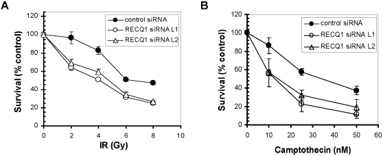 RECQ1 depletion sensitizes cells to DNA damage induced by ionizing radiation or camptothecin. siRNA knockdown of RECQ1 in HeLa cells leads to increased sensitivity to treatment with IR ( Panel A ) or CPT ( Panel B ). HeLa cells treated with either RECQ1 siRNA or control siRNA (#C) were plated in quadruplicate and treated with increasing doses of IR or concentrations of CPT. Total DNA content was measured as an indication of cell growth. Two independent siRNAs (#L1 and #L2) used to downregulate RECQ1 expression resulted in similar growth phenotype in HeLa cells. Three independent determinations of cell survival were performed and the mean±SD is presented.