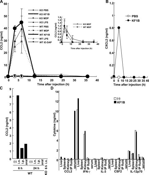 Nod1-dependent CCL2 induction in vivo. (A) WT and Nod1-deficient mice were administrated i.p. with 200 μg KF1B, iE-DAP, MDP, E. coli O55:B5 LPS, or PBS alone. The serum level of CCL2 was determined by ELISA. Because the relative levels of CCL2 induced by MDP was lower than those by KF1B, the CCL2 levels induced by MDP are also given (inset). The CCL2 levels are given with means ± SD from three mice. (B) The serum CXCL2 level from mice stimulated with 50 μg KF1B or PBS alone at indicated times after i.p. injection was determined by ELISA. Representative data from three independent experiments are shown. (C) The serum levels of CCL2 from WT and Nod1-deficient (KO) mice treated with 50 μg by a different administration method (i.n. [intranasal], i.p., and oral route) at 6 and 24 h were determined by ELISA. Representative data from four independent experiments are shown. (D) cytokine levels in tissues from mice stimulated with 200 μg KF1B or PBS alone (−) 6 h after i.p. injection was determined by ELISA. Representative data from three independent experiments are shown. The results are representative of at least three experiments.