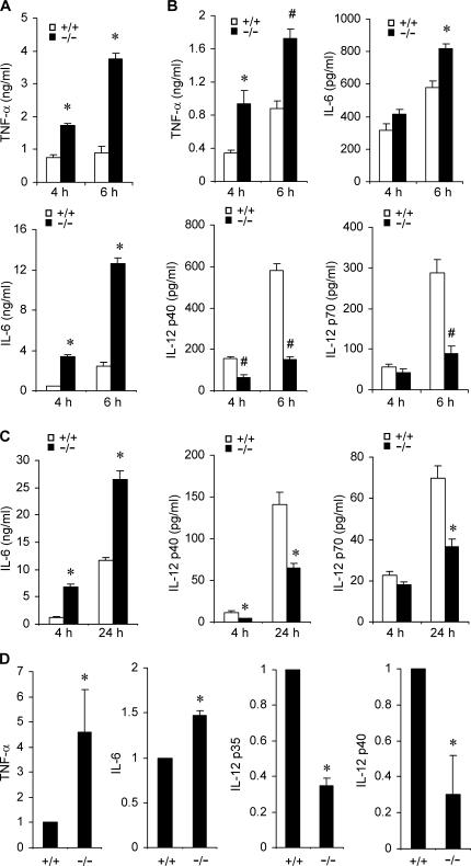 Knockout of Mkp-1 alters cytokine expression in macrophages. (A) Cytokine production by IFN-γ–primed resident peritoneal macrophages. Resident peritoneal macrophages primed with IFN-γ overnight were stimulated with LPS for 4 and 6 h. Cytokine concentrations in the medium were analyzed by ELISA. Data are presented as the mean ± SEM ( n = 3 in each group). *, Mkp-1 −/− different from Mkp-1 +/+ , P