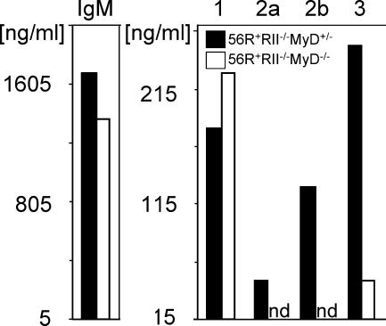 Loss of IgG2a and 2b autoantibodies in MyD88-deficient mice was B cell intrinsic. Naive splenic B cells from the indicated genotypes were stimulated with 15 μg/ml CpG1826, 10 μg/ml anti-CD40, and 10 ng/ml rmIL-4 in vitro for 5 d and total Ig subclass concentrations in the supernatants were determined. Class switching to IgM was unchanged and to IgG1 increased in MyD88-deficient backgrounds. In contrast, switching to IgG2a, 2b, and 3 was significantly impaired.