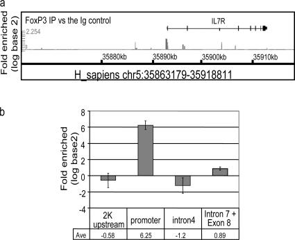 ChIP-chip and ChIP-qPCR analysis of FoxP3 bound DNA from CD4 + CD25 hi human T reg cells. Anti-FoxP3 or control rabbit Ig was used to precipitate cross-linked protein–DNA complexes from expanded CD4 + CD25 hi human T reg cells lysate. The cross-linking of the immunoprecipitated material was removed and protease-treated and the DNA was purified and amplified. The resultant material was hybridized to the whole genome using GeneChip Human tiling 1.0R array set to identify the locations of binding sites for FoxP3. Two sets of graphs: FoxP3 IP versus the Ig control and FoxP3 IP versus Input DNA were generated on the hs.NCBIv35 version of the genome essentially following the method described in Cawley et el. (reference 50 ). (a) Signal enrichment graphs of IL-7R locus (chr5:35863179-35918811). Several regions in IL-7R locus are predicted to be positive (chr5:35892564-35892809 promoter) and negative (chr5:35890618-35890846 2K upstream; chr5:35907667-35907852 Intron 4; chr5:35911721-35911888 intron 7 and exon 8). (b) SYBR green qPCR of IL-7R chromosomal regions. FoxP3 IP versus the IgG fold enrichment ratio was determined from duplicate ChIP assay evaluated in duplicate by real time PCR.