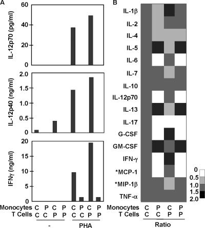 IL-12 and IFN-γ production by cocultured monocytes and T cells from the patients studied and healthy controls. (A) IL-12p70, IL-12p40, and IFN-γ production, measured using classical sandwich ELISA, in a mixture of purified monocytes and T cells, as indicated upon stimulation with PHA. The results shown are representative of three independent experiments for P2 and one for P3. (B) The same coculture supernatants were analyzed for a multiplex of 16 cytokines, using the Bioplex array. Each column represents the data for one monocyte–T cell coculture system, and all four columns correspond to the same experiment. Each row corresponds to one cytokine. The gray-scale bar indicates the magnitude of cytokine expression, using the control/control (C/C) coculture system as a reference. For each data point, the amount of cytokine produced in the unstimulated system was subtracted from that produced in the PHA-activated system, and the result obtained was compared with the reference value (C/C). The production of *MCP-1 and *MIP-1β by monocytes was PHA-dependent but T cell–independent, as monocytes responded to PHA by producing large amounts of these cytokines, whereas the addition of T cells did not increase cytokine production. The defects in the production of IL-6, IL-12p70, G-CSF, IFN-γ, and MCP-1 were confirmed in three independent experiments on blood cells from P2 and one experiment on blood from P3.