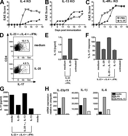 IL-13 is required for Th17 suppression in IL-25–mediated protection from EAE. Clinical score of il4 −/− (A), il13 −/− (B), or il4ra −/− mice (C), with five mice per group injected daily with PBS or mIL-25 (s.c.) from days 1–12. Results are representative of two experiments. (D–F) Naive T cells and LPS-activated CD11c + DCs were obtained from DO11.10 × RAG −/− mice (pool of five mice) and incubated for 3 d with IL-23 in the presence of OVA peptide. IFNγ and IL-4 were neutralized in these cultures. (D) The effect of IL-25 addition on the number of IL-23–induced IL-17 producers was assessed by intracellular staining for IL-17. (E) IL-13 expression in these cultures was determined by LUMINEX. (F) The modulation of IL-17 protein production in IL-23–driven cultures by IL-25, IL-25 plus anti–IL-13, and IL-13 is shown in percentage of IL-23–induced IL-17 production without addition of exogenous factors (mean IL-17 production is 202.3 pg/ml, assessed by LUMINEX). Data shown are representative of at least two experiments (D and E) or pooled data from two similar experiments (F). (G) Purified MOG 33-55 TCR transgenic T cells and LPS-activated CD11c + DCs were incubated for 4 d with IL-23 in the presence of MOG peptide and neutralizing antibodies against IFNγ and IL-4. IL-17 production after incubation with IL-25, IL-25 plus anti–IL-13, and IL-13 was measured by LUMINEX. (H) DCs were purified from spleens and superficial lymph nodes and activated with LPS with or without addition of IL-13. After 24 h, mRNA expression relative to ubiquitin was measured for IL-23p19, IL-1β, and IL-6 by quantitative real-time PCR. Shown is an experiment using DCs from C57BL/6 mice representative of two C57BL/6 and two BALB/c experiments with a similar outcome ( n = 3–5 mice pooled per experiment).