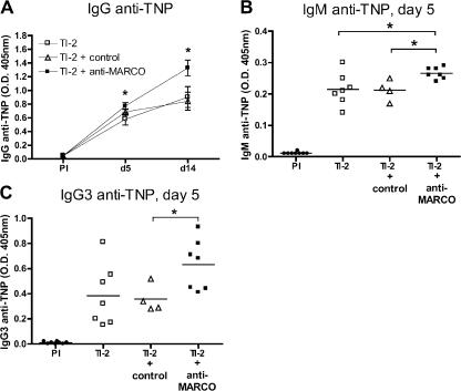Anti-MARCO antibodies affect TI-2 B cell responses in C57BL/6 mice. WT mice were injected with 5 μg of the TI-2 antigen TNP-Ficoll alone ( n = 7) or with 100 μg rat IgG anti-MARCO ( n = 7) or a rat isotype control ( n = 4). The data are shown for IgG (A), IgM (B), and IgG3 (C) anti-TNP response pre-immune (PI) at days 5 and 14. In A, data are presented as mean ± SEM, and in B and C, individual data and mean are shown. *, P