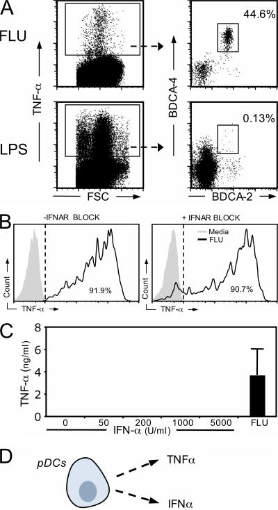 pDCs secrete robust amounts of TNFα in an IFNα-independent manner. (A) PBMCs were incubated for 5 h with 50 HAU/ml FLU or 10 μg/ml LPS, and brefeldin was added during the final 2 h 30 min. Unstimulated PBMCs were used to establish the gating of TNFα-positive cells (not depicted). (B) PBMCs were stimulated for 5 h with FLU ± anti-IFNAR2. ICCS and surface staining were again performed to evaluate TNFα production in stimulated pDCs. The histograms show TNFα levels in BDCA-2 + BDCA-4 + cells. (C) 22,000 purified pDCs were exposed to the indicated amount of rIFNα2. After 20-h incubation, supernatants were harvested and TNFα level was evaluated by Luminex. For each dataset, results are representative of two independent experiments. (D) A schematic representation of TNFα production by pDCs that are independent of the IFNα pathway.