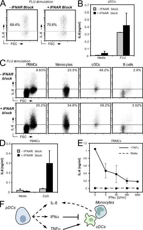 pDC-derived IFNα inhibits IL-8 production in monocytes and cDCs. (A) PBMCs were stimulated for 5 h with FLU ± anti-IFNAR2. ICCS and surface staining were performed to evaluate IL-8 production in stimulated pDCs. The plots show IL-8 levels in BDCA-2 + BDCA-4 + cells. (B) Purified pDCs were stimulated for 20 h with 50 HAU/ml FLU ± anti-IFNAR2, and supernatants were harvested and analyzed by Luminex. Data shown are the mean of results obtained from two donors. (C) PBMCs were stimulated for 5 h with 50 HAU/ml FLU ± anti-IFNAR2. ICCS and surface staining were performed to evaluate IL-8 production in monocytes (gated on CD14 + expression), cDCs (identified as BDCA-1 + CD19 − cells), and B cells (gated on CD19 + expression). For each dataset, results are representative of two independent experiments. (D) 5 × 10 5 PBMCs were incubated for 5 h with 50 μg/ml CpG-2216 ± anti-IFNAR2. Supernatants were harvested, and IL-8 levels were evaluated by Luminex. (E) 10 6 PBMCs were cultured in the presence of 1 ng/ml rTNFα (solid line) or media alone (dashed line) in the presence of the increasing amounts of rIFNα. After 20 h, supernatants were harvested and IL-8 levels were evaluated by Luminex. Data show the average values obtained from experiments performed on two healthy donors. (F) A schematic representation illustrating the opposing effects of pDC-derived TNFα and IFNα on IL-8 production.